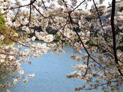 Sakura020