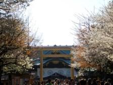 Sakura028