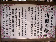 Sakura029
